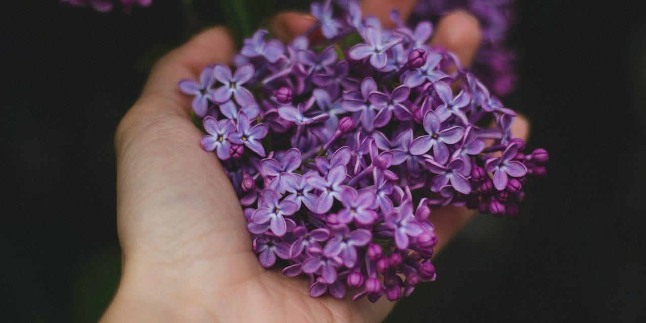 Violette Vlam & Healing Met Deze Methode: Uitleg & Betekenis