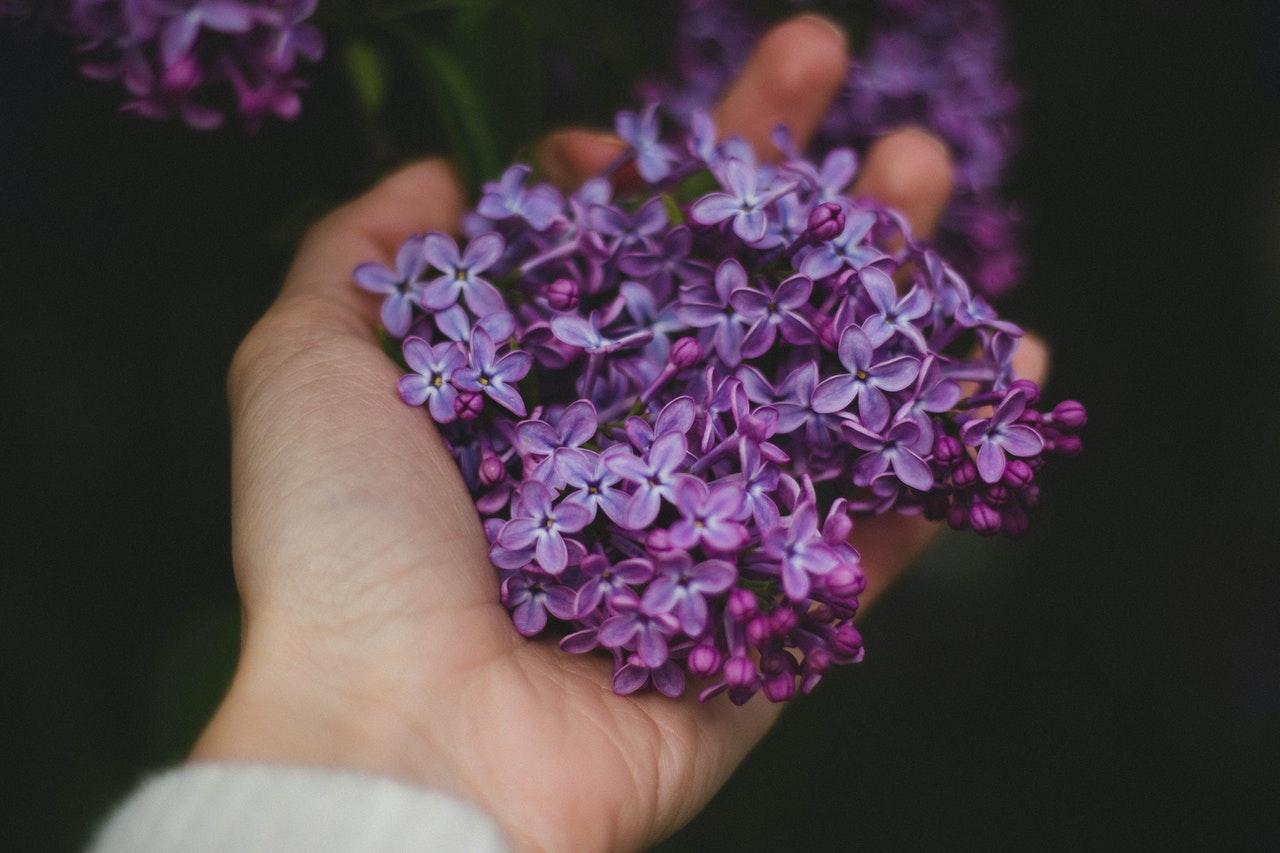 healing met de violette vlam artikel