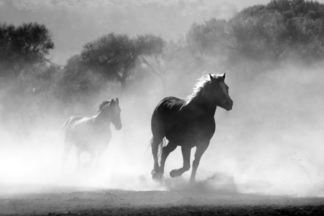 verstand trainen paard (stoppen met piekeren'