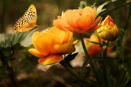 vlindereffect