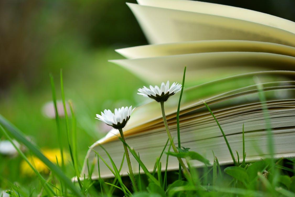 Mindfulness Boeken Top 10 (Beste Aanraders!) [Update 2019]