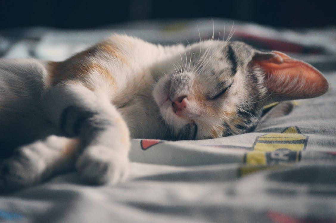 in slaap vallen tips