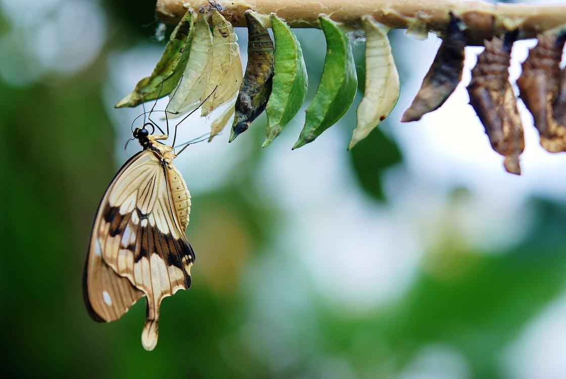 verantwoordelijkheid voor de vlinder nemen