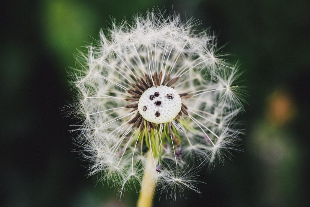 Serendipiteit Betekenis & Voorbeelden (Wist Je Dit?)