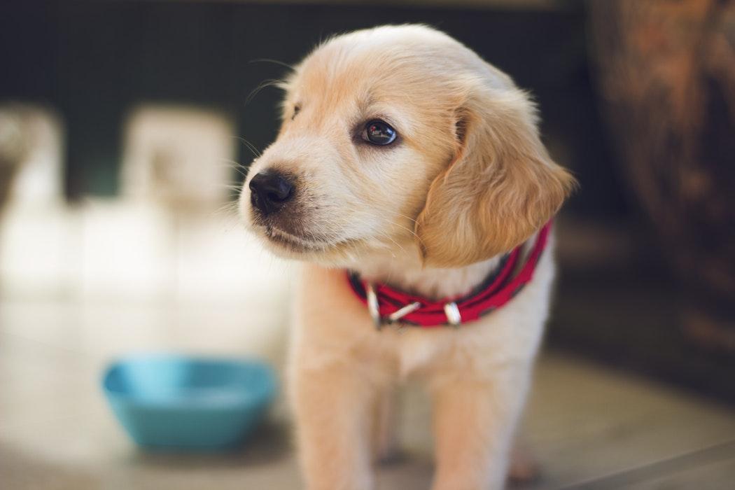 nieuwe puppy gewoonten veranderen