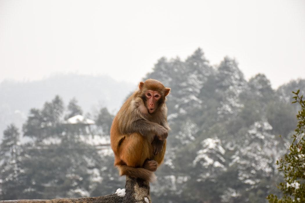 de monkey mind