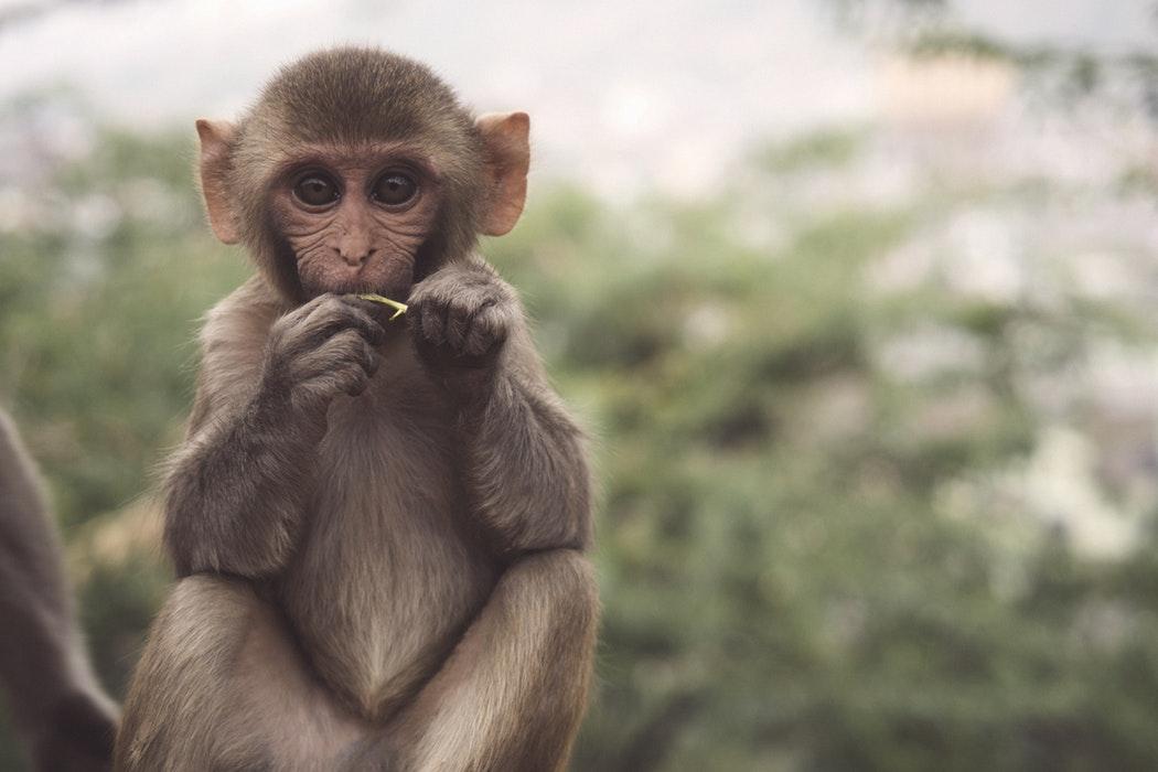 monkey mind gedachten