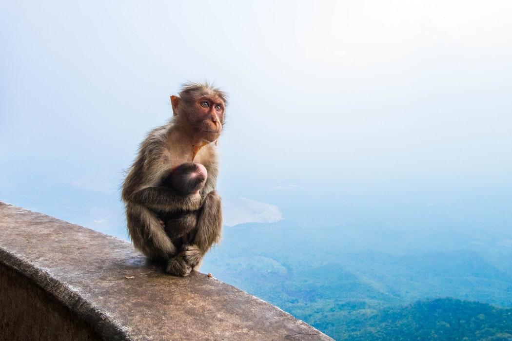 monkey mind in ons hoofd