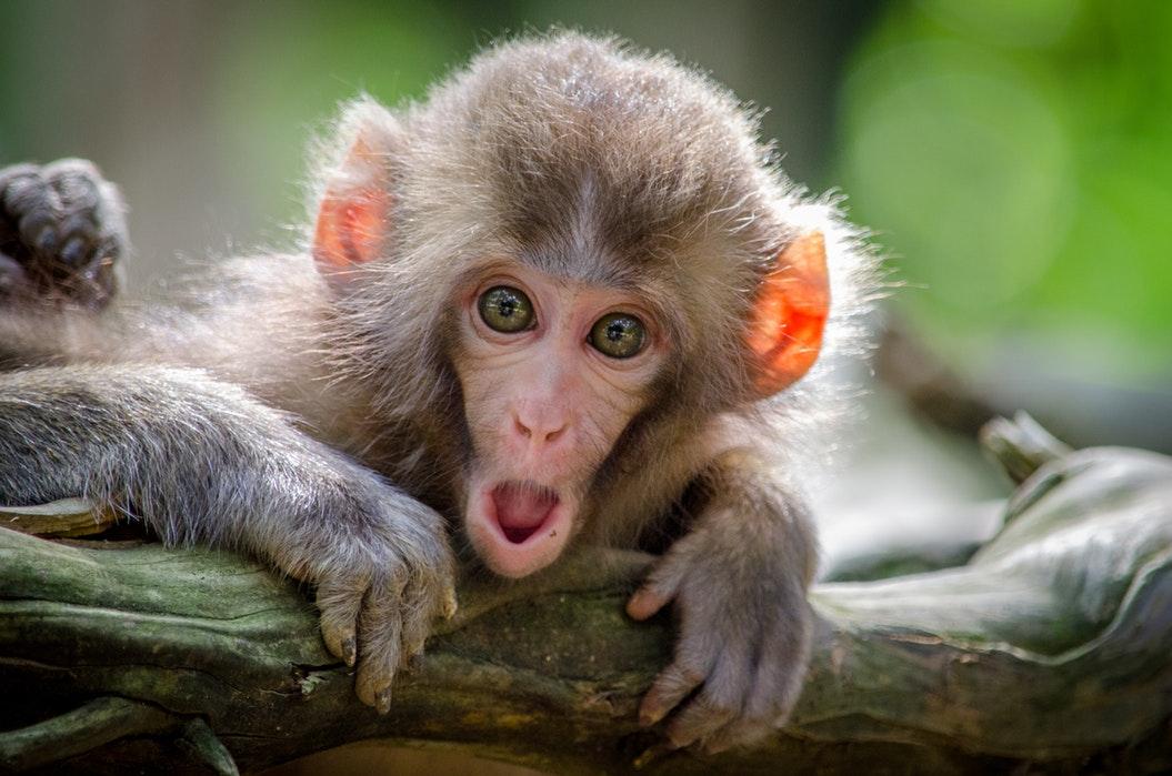 Monkey Mind Kalmeren Met Meditatie, Hoe Zit Dat?