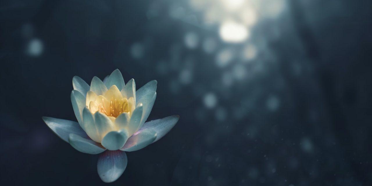 Online Meditatiecursus? 8 x Gratis Lessen & Geleide Meditaties