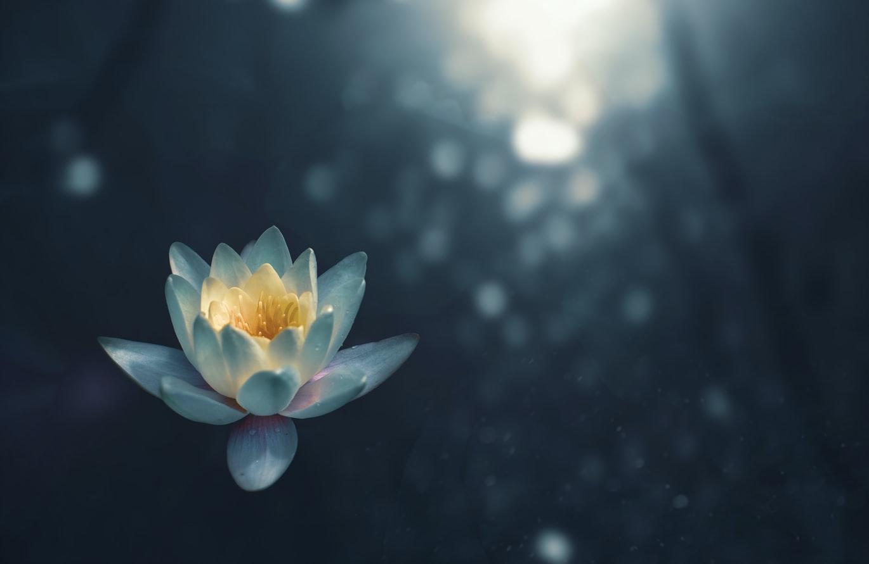 geleide meditaties en cursussen gratis online